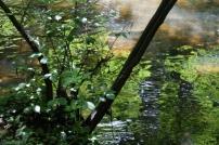 river colours