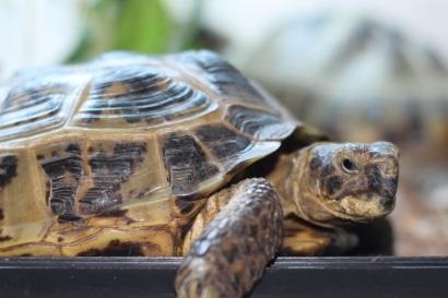 030 Nancy the tortoise resized