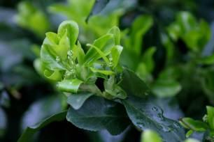 95 back garden greenery resized