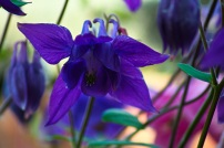 133 garden flowers