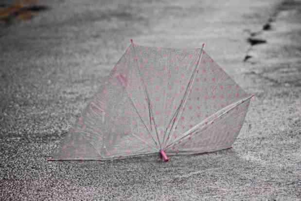 149 a lost umbrella web