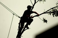 166 the tree man web