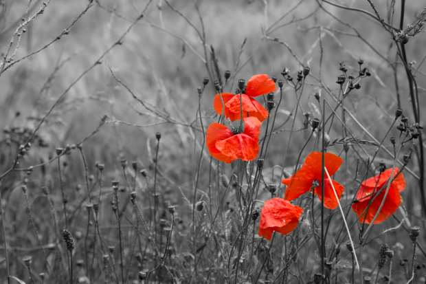 05 colour pop poppies web
