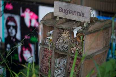 205 Bugtannia web