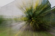 236 garden bush web