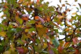 299 Autumn leaves web