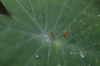 a grasshopper type