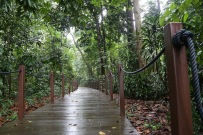 Boardwalk in the rainforest
